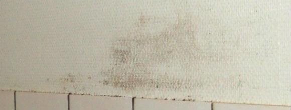 Små mængder skimmelsvamp - Boligselskabet Sjælland